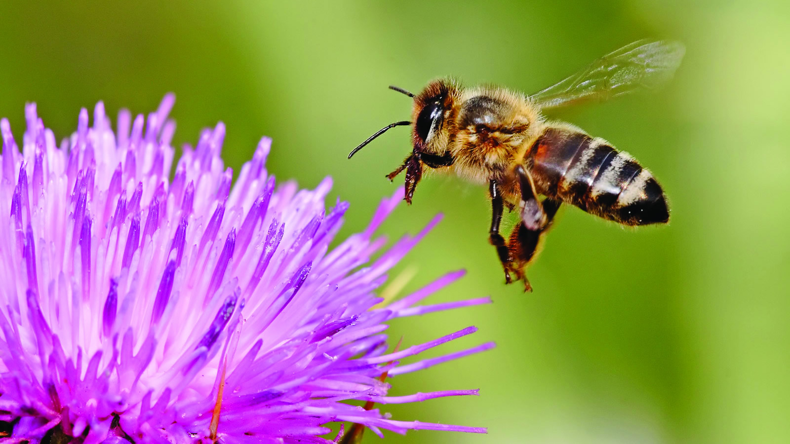 <h4>SAVE THE BEES</h4><h5>Goal: To stem the alarming decline in bees and other pollinator species, let's stop using the bee-killing pesticides known as neonicotinoids.</h5><em>sheliapic76 via Flickr</em>